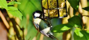 20% Rabatt auf unser gesamtes Vogelfutter-Sortiment