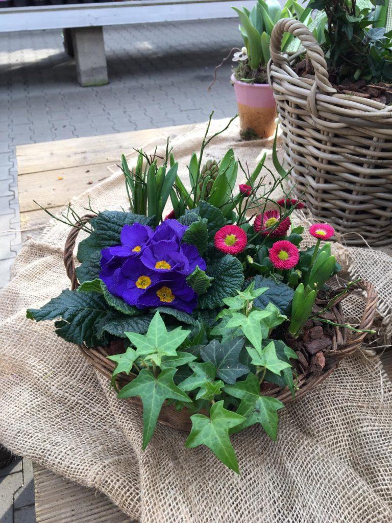 Bepflanzte Schalen