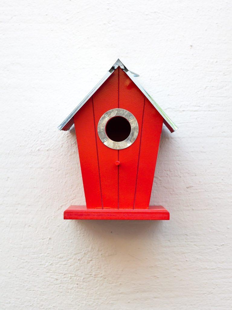 Vögel füttern im Garten oder auf dem Balkon – So geht es richtig!