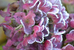 Winterschutz – Handeln Sie jetzt!