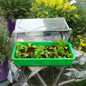 Salat & Gemüse im Mini-Gewächshaus