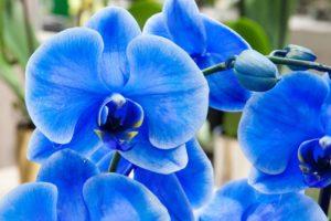 So machen Sie Ihre Orchidee zu einem blühenden Kunstwerk